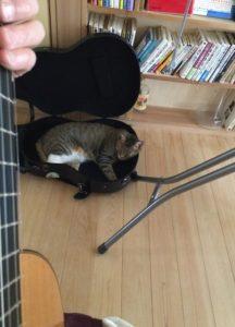 こうしてギターケースの中で大人しく寝ていてくれればいいのですが、