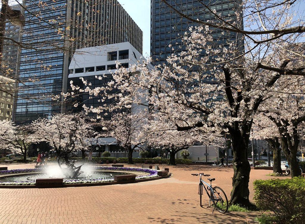 土曜日の朝、日比谷公園の桜