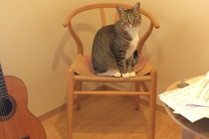 練習中の椅子を占領する猫